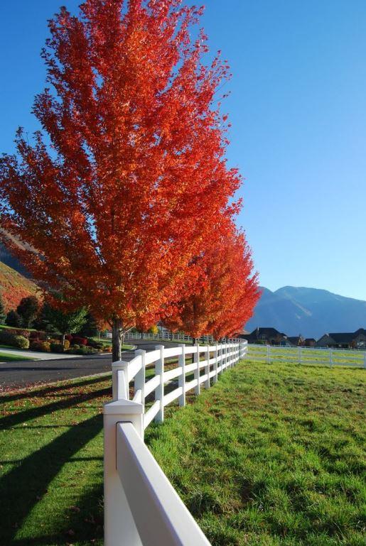 نرده و درخت