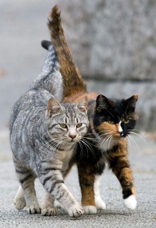 دوتا گربه بغل هم