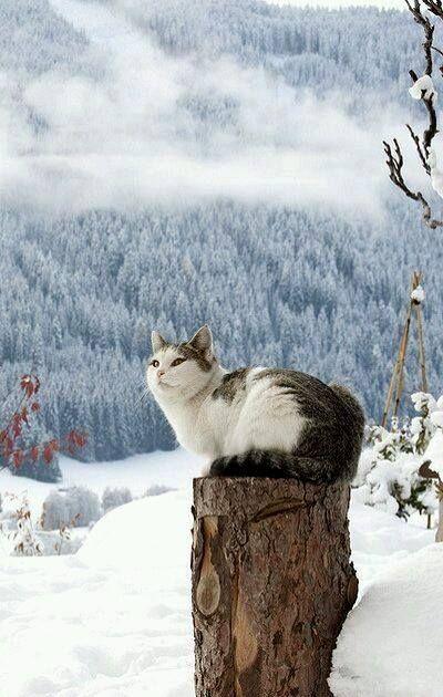 گربه در برف